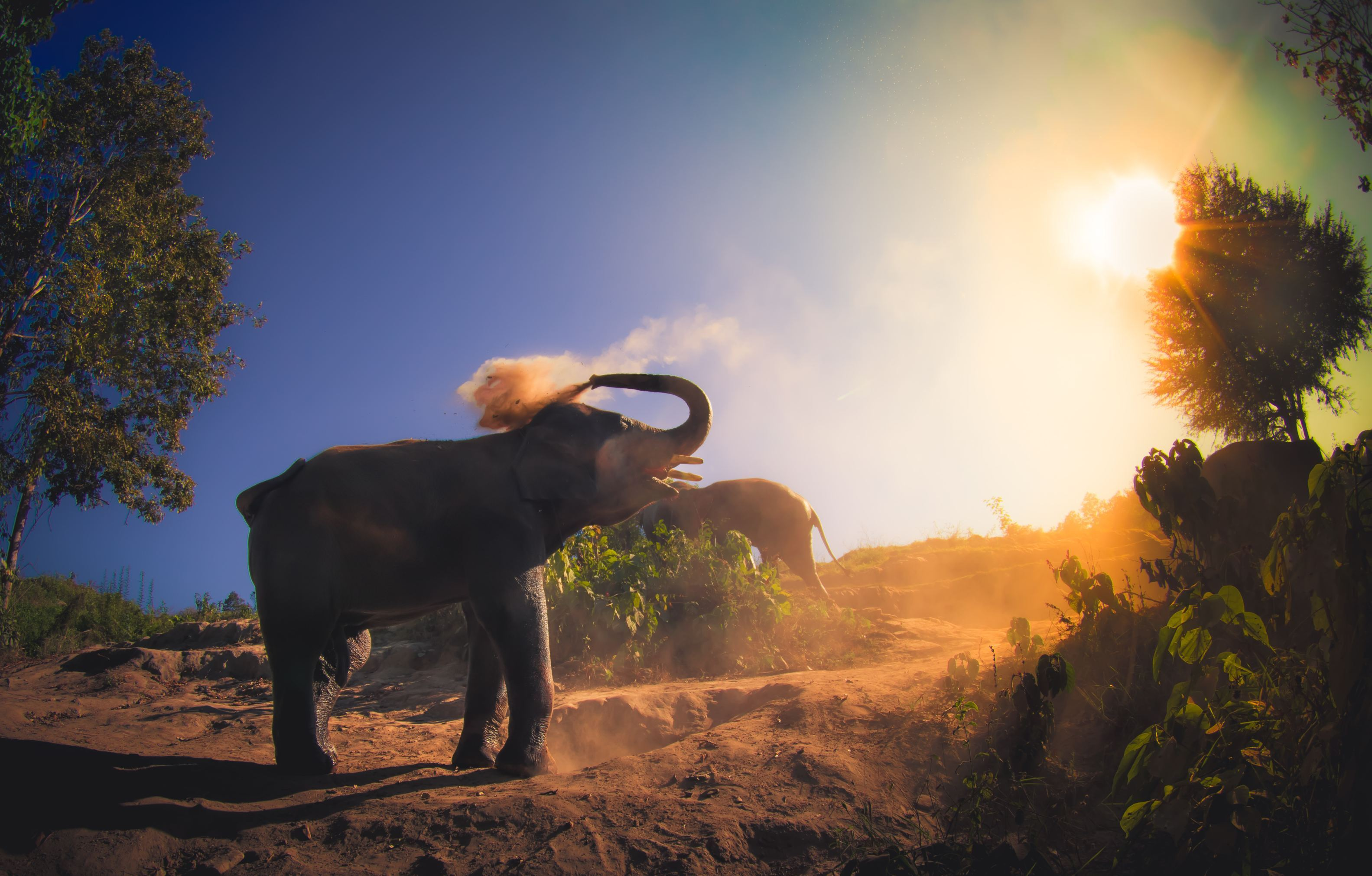 Elephant jungle Sanctuary in Chiang Thailand