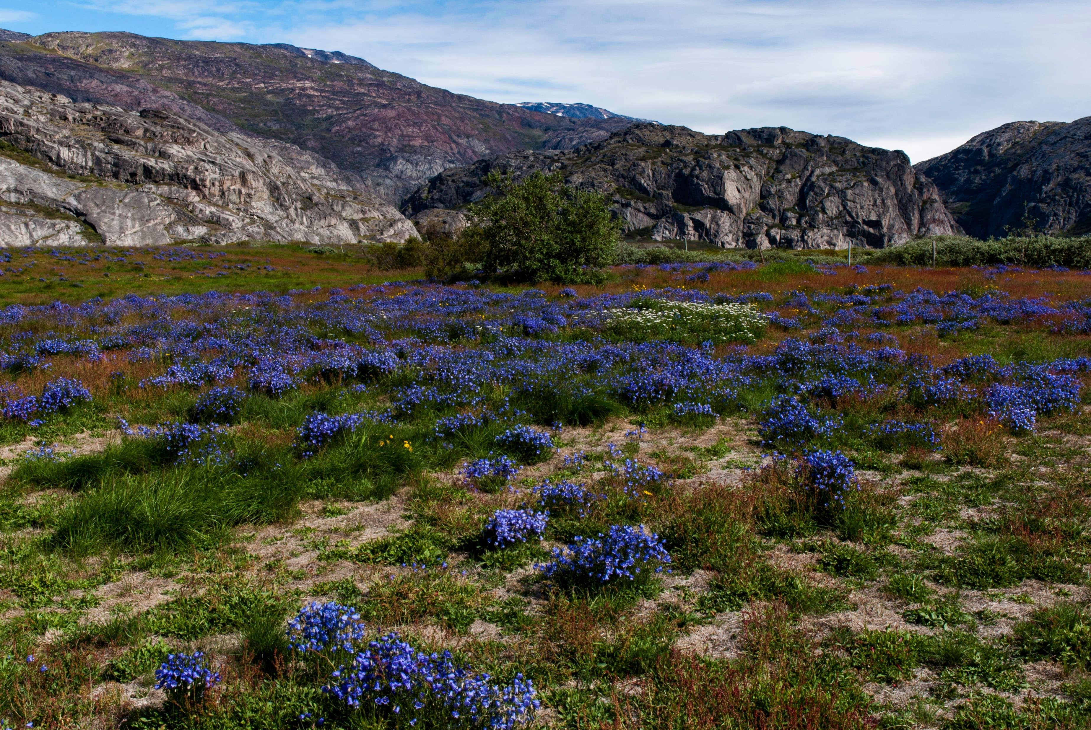 Valley of flowers Greenland