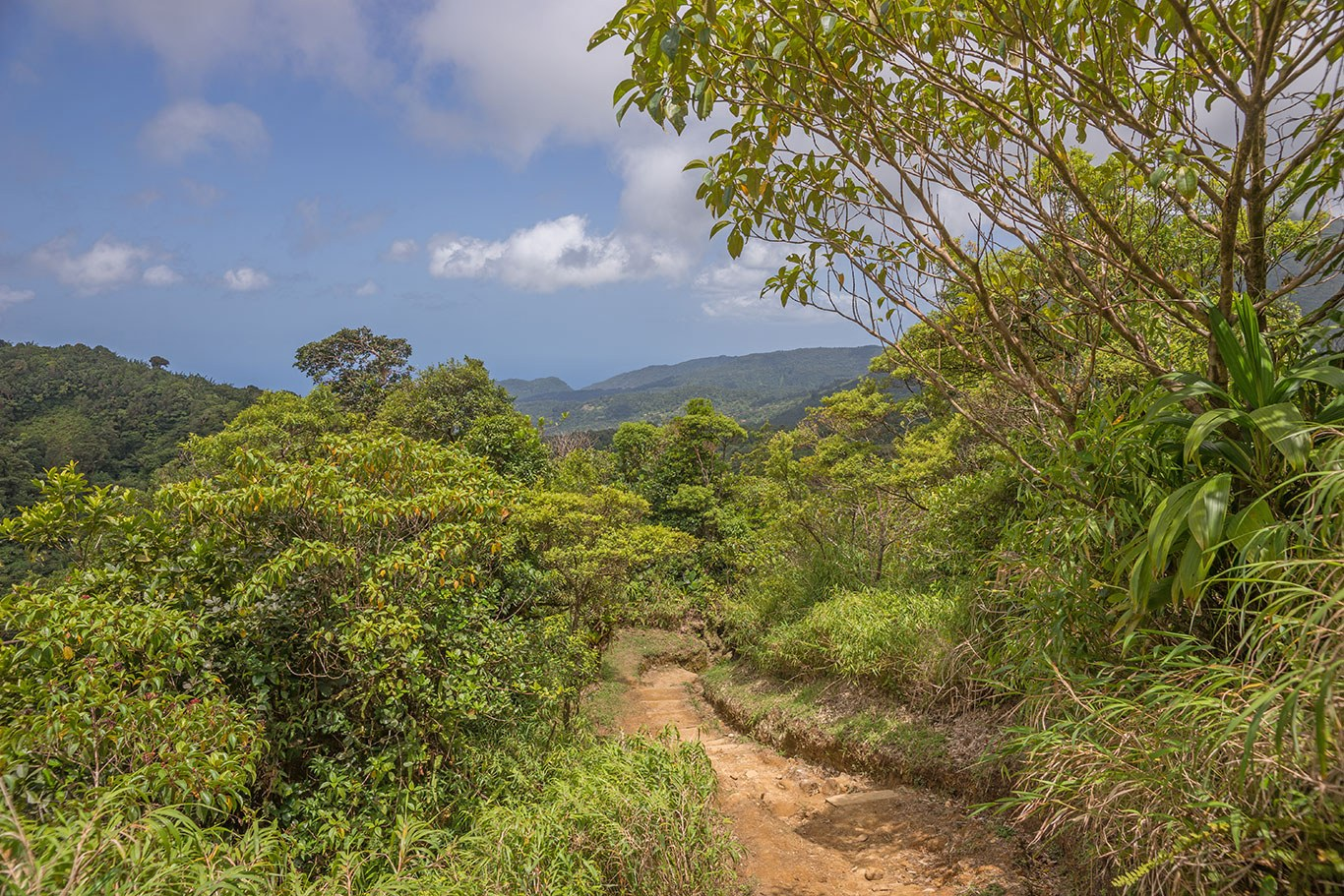 Hiking trail dominica