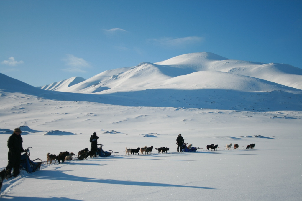 Dog Sledding - Alastair Craig