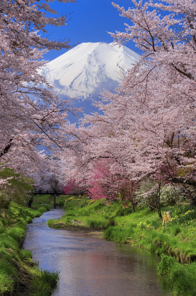 Cruise to Japan