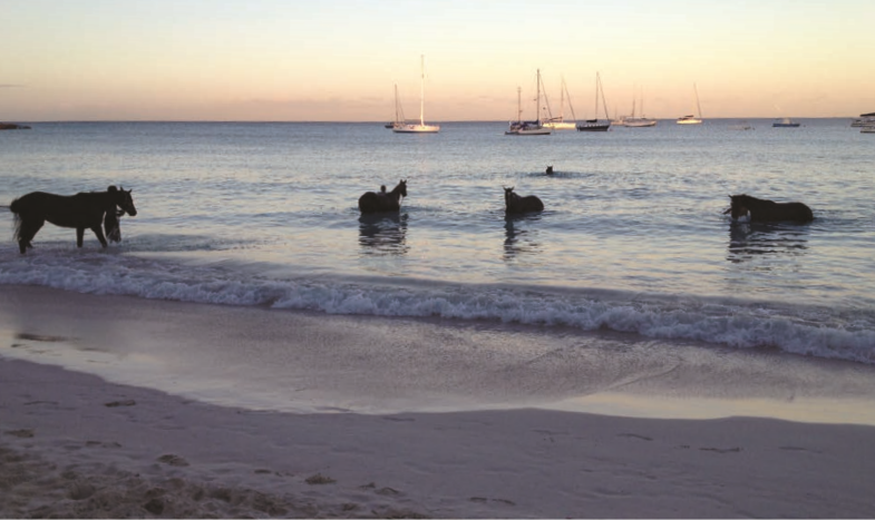 Beach with horses