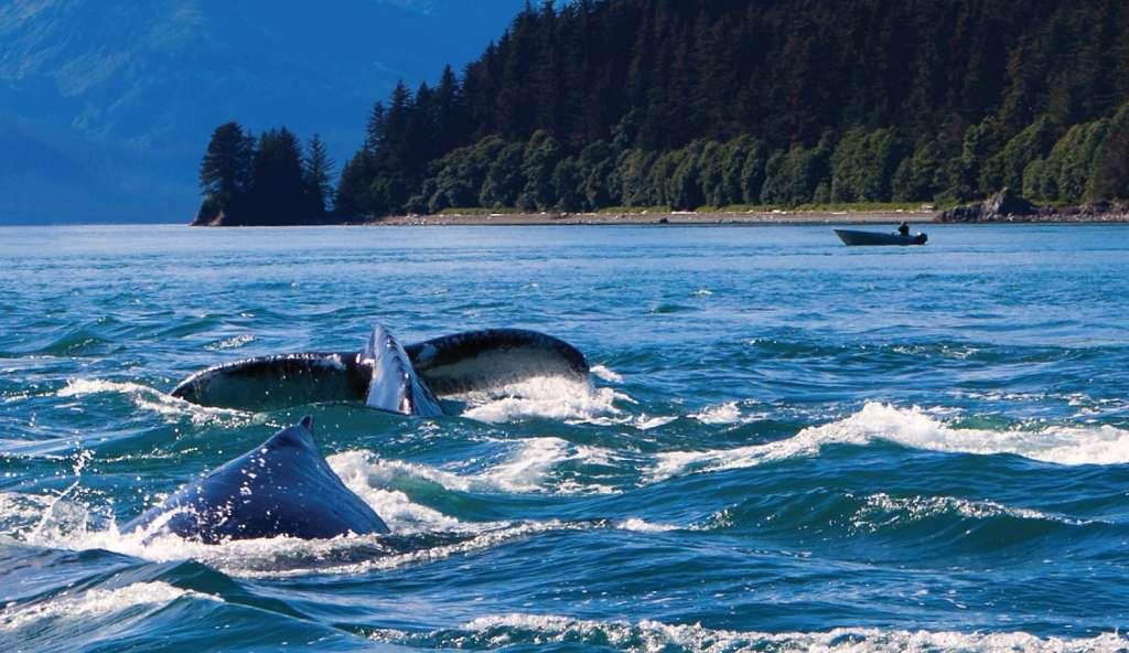 Alaska - whales