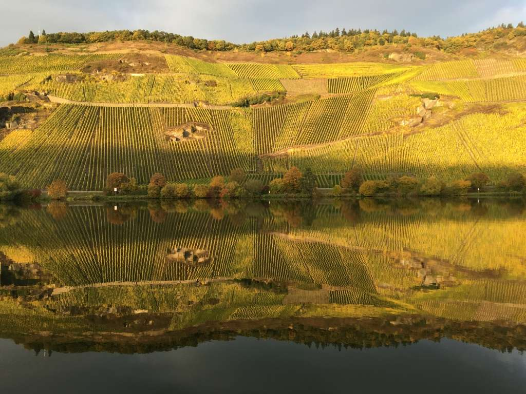 Vineyards - Rhine