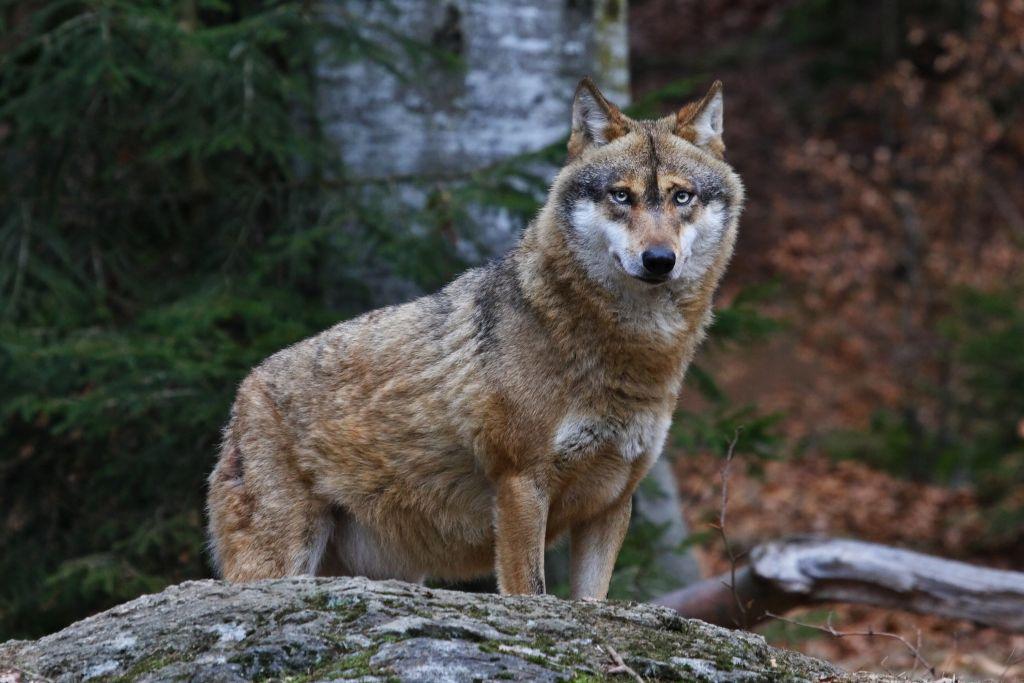 Albania wildlife