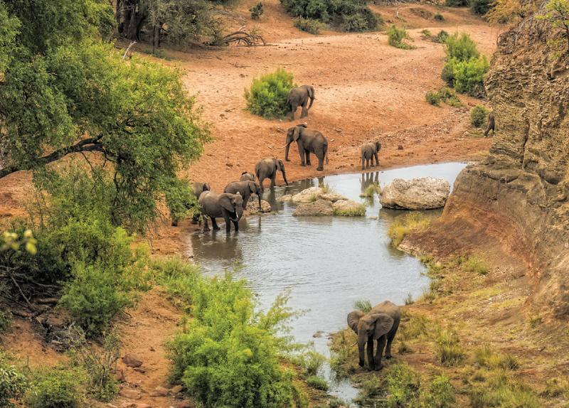 Kruger Reserve - South Africa