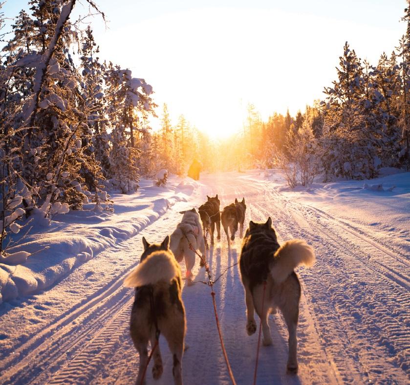 Husky-Sledding - Norway