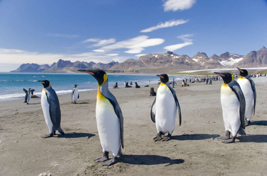 Penguins on the beach - Falkland Islands