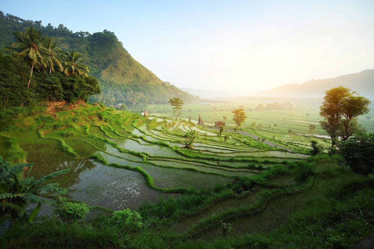 Foto tempat wisata the jungle 14
