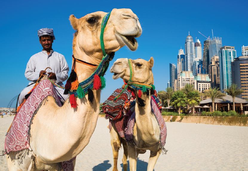 Dubai - camels