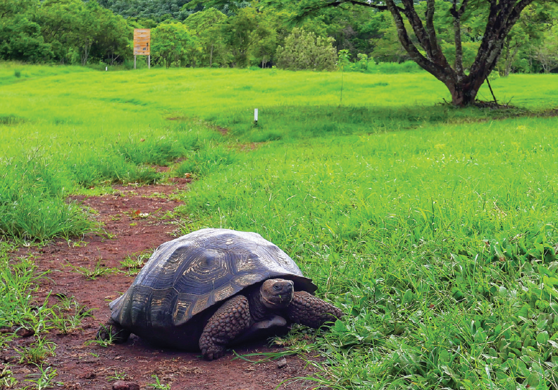 Best holiday destinations: Galapagos