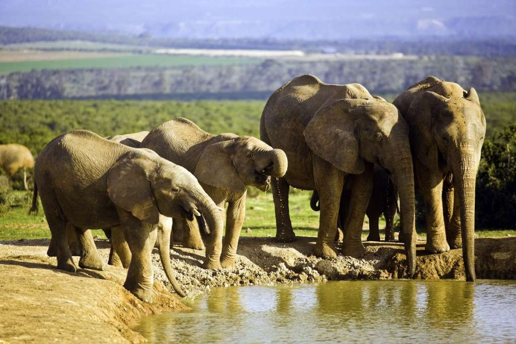 South Africa, African elephants at waterhole