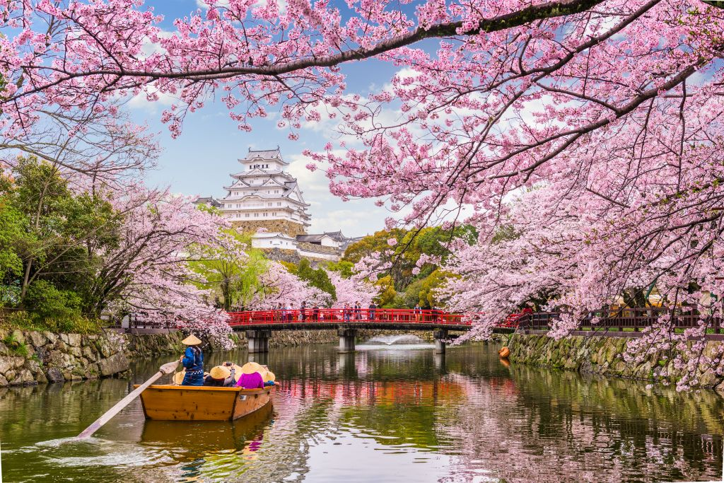 Holland America Line offers a great excursion during Japan cherry blossom season