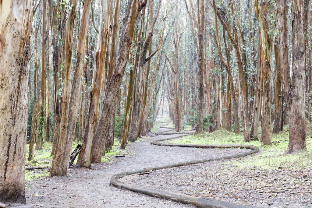 San francsisco trail