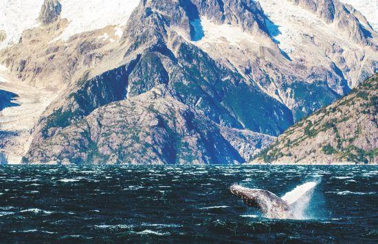 Wildlife cruises: Humpback whales