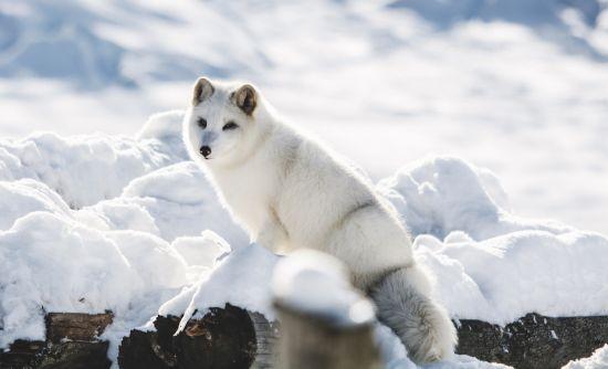 Wildlife cruises: Arctic animals