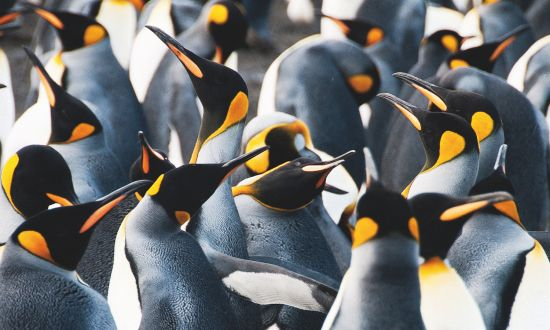 WIldlife cruises: Where to see penguins
