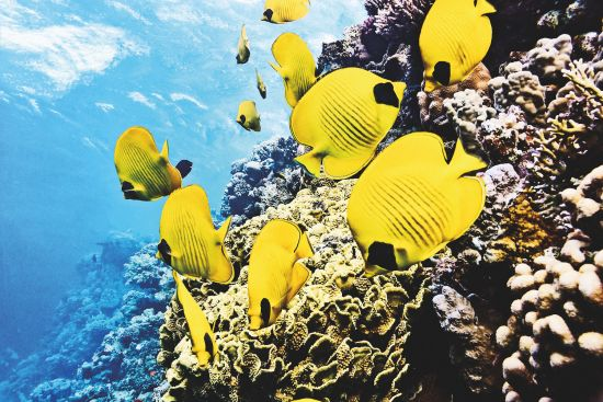 Wildlife cruises: Sealife