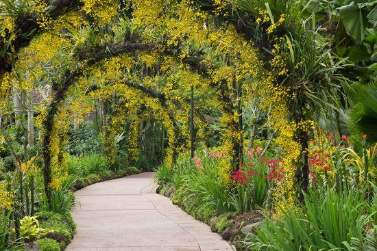 Orchid garden in Singapore botanical gardens