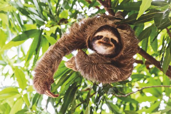 Cruise ship review: Sloths in Panama from Safari Voyager