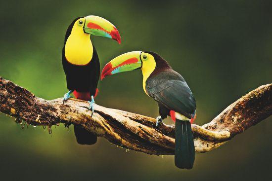 Wildlife cruises: Toucans