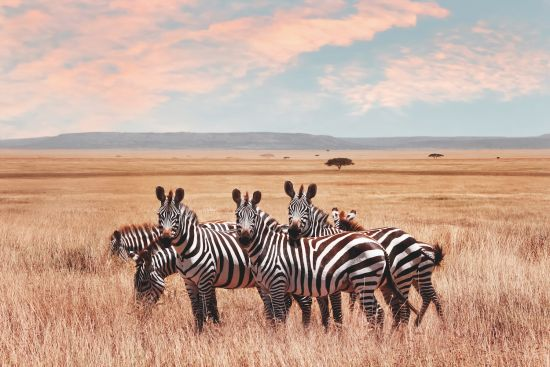 Wildlife cruises: The Big Five in Africa