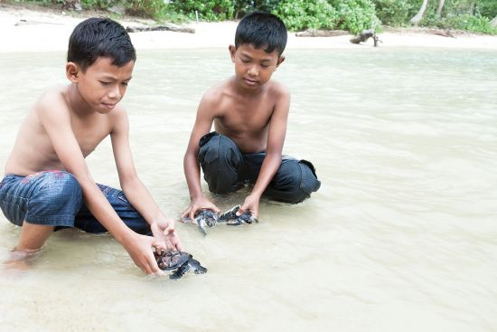 Boys playing with hatched baby sea turtles in the sea