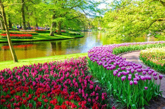 Tulips in Keukenhof gardens, Amsterdam