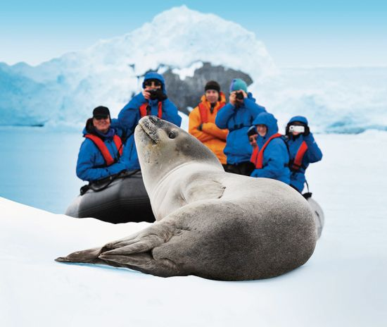 Antarctica wildlife, expedition cruise