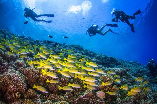 Ocean Cruises: divers and tropical fish in Pacific Ocean