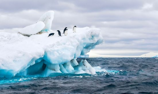 Ocean Cruises: Penguins in Antarctic Ocean