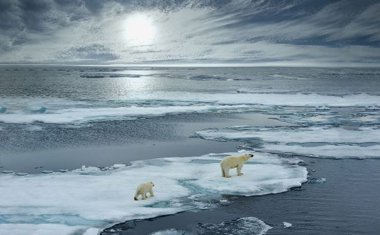 Ocean cruises: polar bears in Arctic Ocean