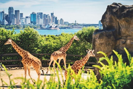 Round the world cruise: Sydney Australia