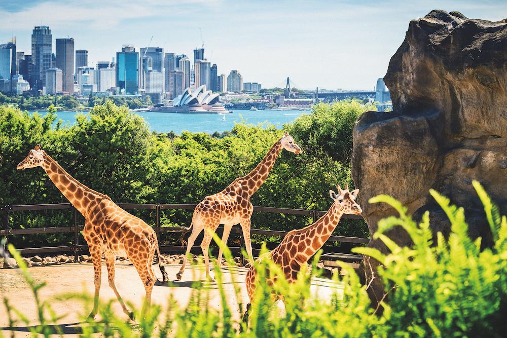 Round the world cruise: Sydney Australia