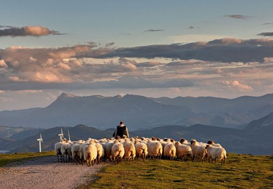 Oceania Cruises, Go Local, sheep farm