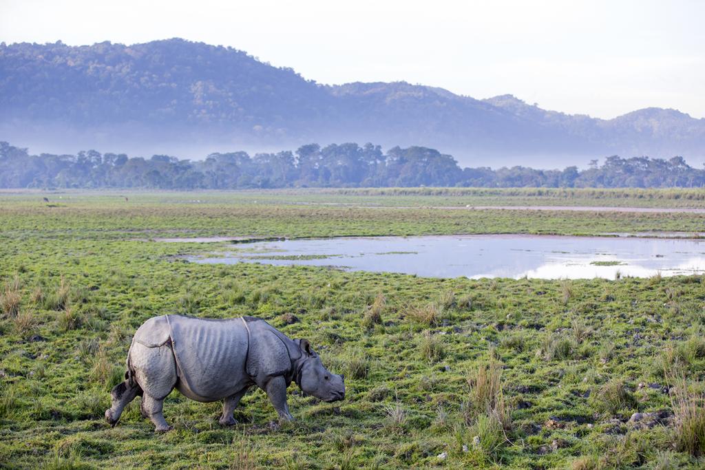 Rhino in Kaziranga national park, India cruise