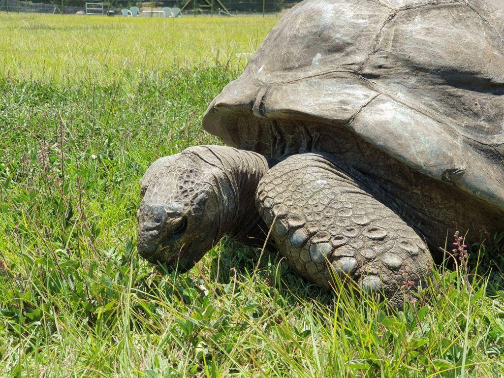 Boudicca, world cruises: Seychelles tortoise