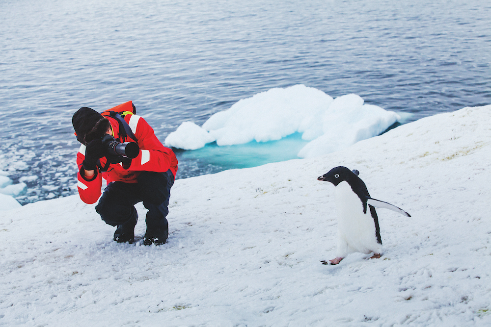 Expedition cruise penguins