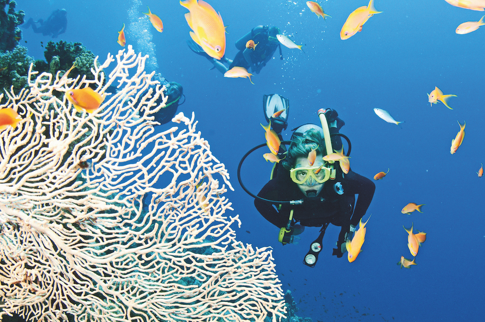 Expedition cruise: The Great Barrier Reef