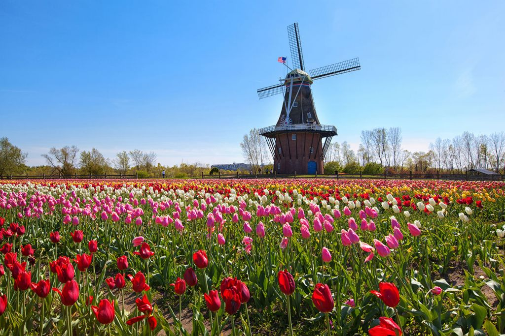 Black Friday cruise deals: Holland tulip festival