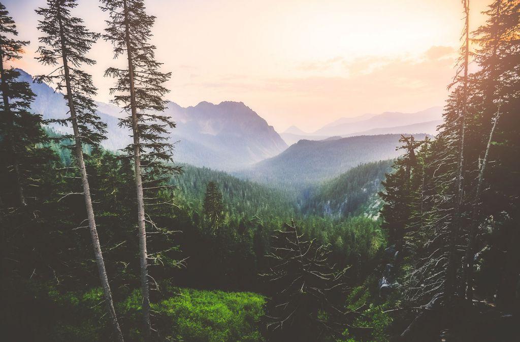Washington State: scenic view from mt rainier view point, mt Rainier, USA