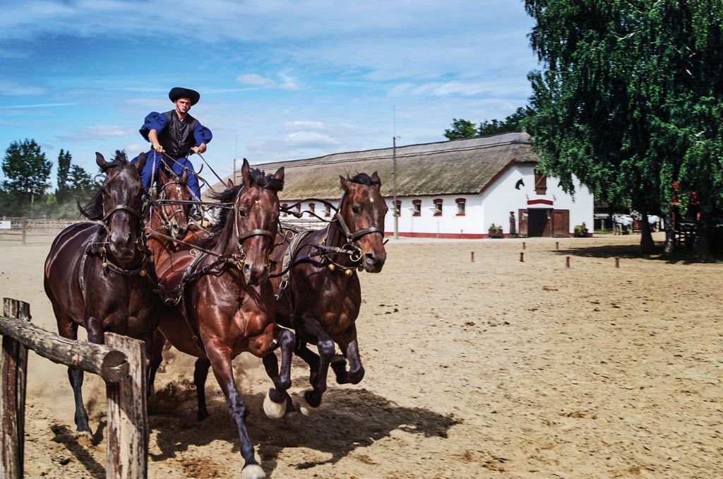 Danube river cruise: Hungary horseriding
