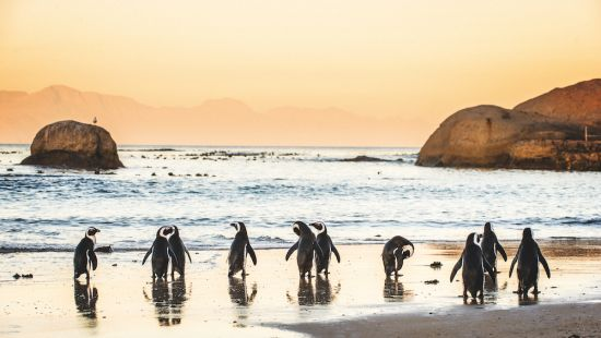 Solo travel: Penguins in Cape Town