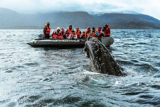 Patagonia cruise: zodiacs trips