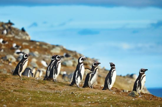 Patagonia cruise: penguin colony