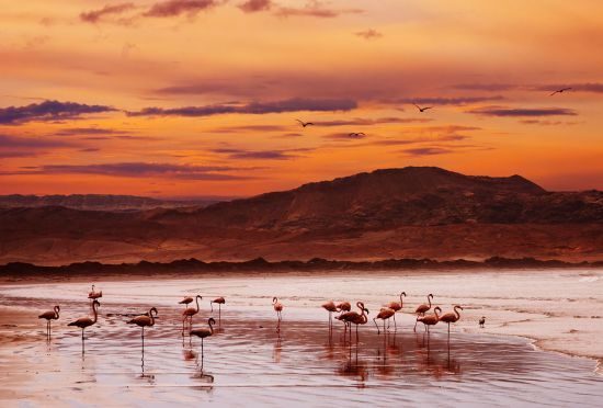 Luderitz port guide: flamingoes
