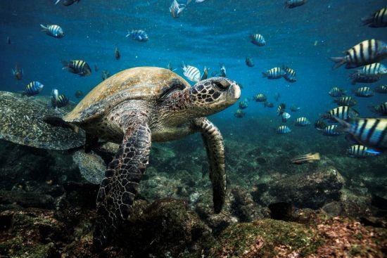 Galapagos silversea